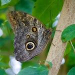 Butterfly eye - canon 550d